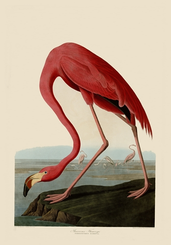 James Audubon Museum Quality Images on DVD (The Highest Resolution)