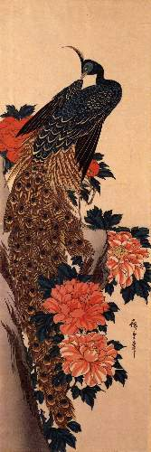 Peacock and peony by Hiroshige