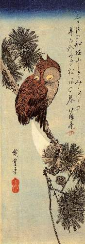 Small brown Owl on a Pine branch by Hiroshige