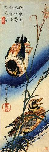 Two ducks in reeds by Hiroshige