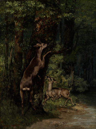Courbet - Deer in the Forest
