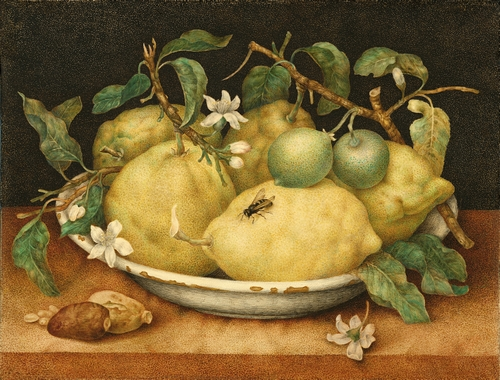 Garzoni - Still Life with Bowl of Citrons