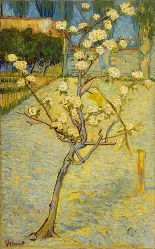 Van Gogh - Small pear tree in blossom
