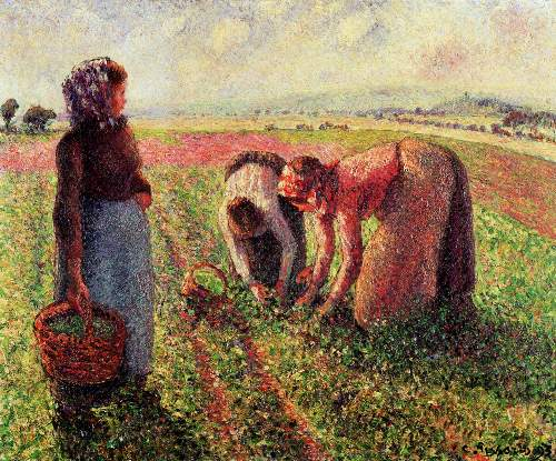 Peas growing in Eragny by Pissarro