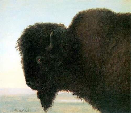 Bierstadt - Buffalo Head