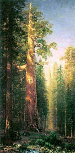 Bierstadt - The big trees, Mariposa Grove, California