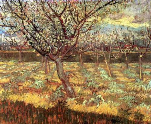 Van Gogh - Apricot Trees in Blossom2