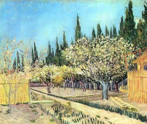 Van Gogh - Flowering fruit garden, surrounded by cypress